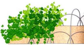 Выращивание огурцов на каркасе из прутьев