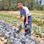 Основные правила полива овощей: сколько, когда и как