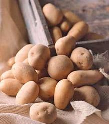 Хранение картофеля в первые дни