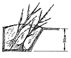 Правильная прикопка саженцев: несколько растений