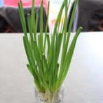 Как вырастить зеленый лук в воде