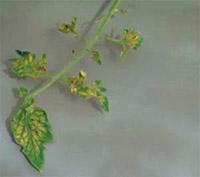 Дефицит хлора: фото
