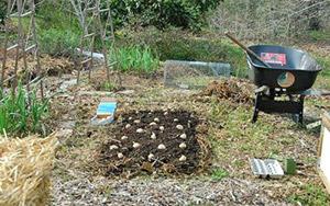 Вырастить картошку под мульчой