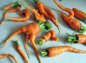 Уродливая морковь