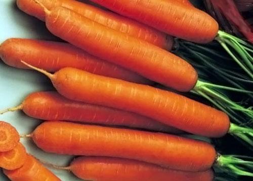 Сортотипы моркови
