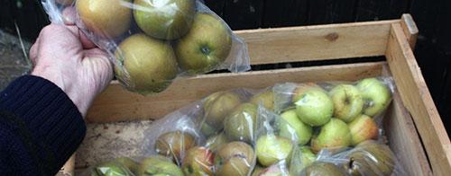 Хранение яблок зимой в квартире