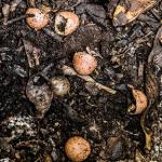 Органические удобрения: навоз, компост, перегной и др.