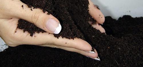 Выращивание рассады земляники: посев семян