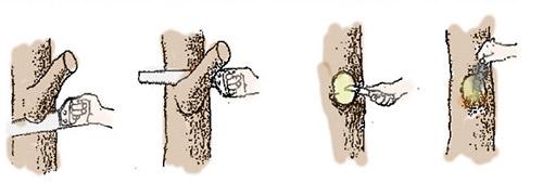 Как правильно обрезать ветку на кольцо