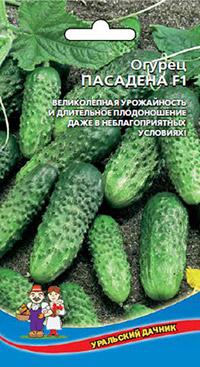 Устойчивые к болезням огурцы: Пасадена