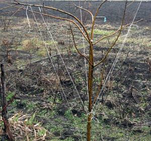 как формировать деревья гнутьем
