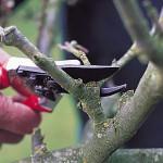Инструменты для обрезки деревьев и кустарников
