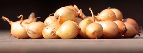Выращивание лука-севка из семян: уборка и хранение лука-севка
