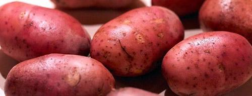 Красные сорта картофеля: рокко