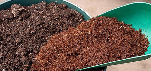 Выращивание рассады: почвенная смесь