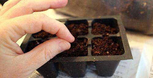 Выращивание рассады без ошибок