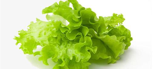 Выращивание ранней зелени: листовой салат