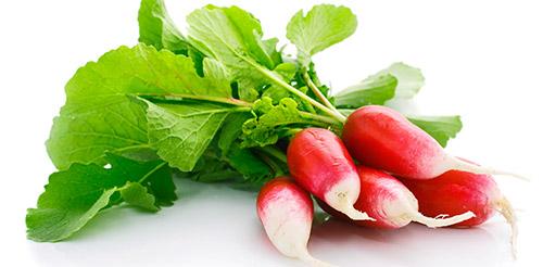 Выращивание ранних овощей в теплице: редис
