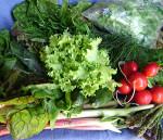Выращивание ранней зелени и овощей в теплице
