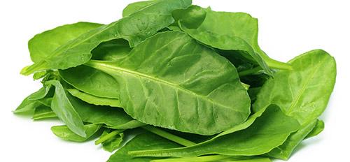 Выращивание ранней зелени: шпинат