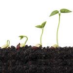 Как ускорить прорастание семян: замачивание, проращивание и другие приемы