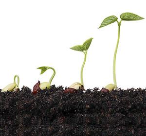 приемы для ускорения прорастания семян