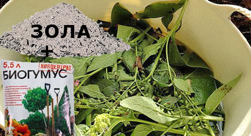 Как получить хороший урожай клубники: подкормки