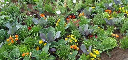Как избавиться от слизней в огороде