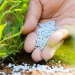 Фосфорные удобрения: применение, дозировка, виды