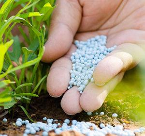 Фосфорные удобрения применение, дозировка, состав