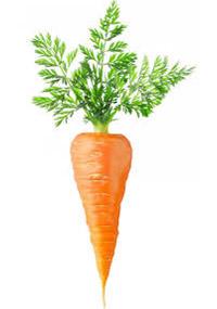 что посадить вместе с морковью
