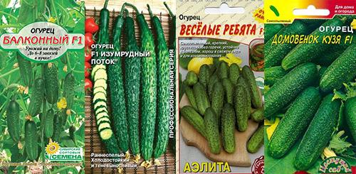 Выращивание огурцов на подоконнике: сорта