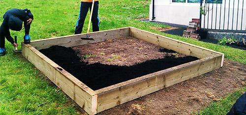 Выращивание тыквы: грядка