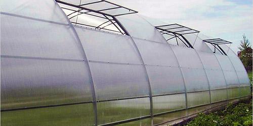 Как защитить огород от ветра