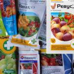 Препараты от фитофторы: чем опрыскать заболевшие растения