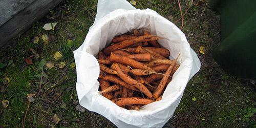 Хранение моркови в пленочных мешках