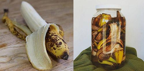 Готовим удобрение из банановой кожуры: 5 рецептов - Дачные советы