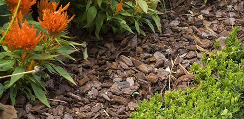 Мульчирование почвы древесной корой