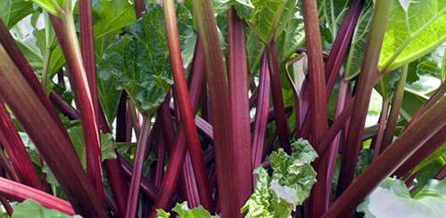 Какие овощи легче всего вырастить - ТОП 10 - Дачные