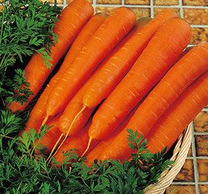 устойчивые к морковной мухе сорта моркови