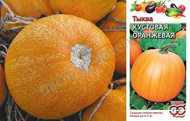 Тыква кустовая оранжевая: описание сорта и фото