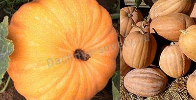 Тыква палав-каду: описание сорта и фото