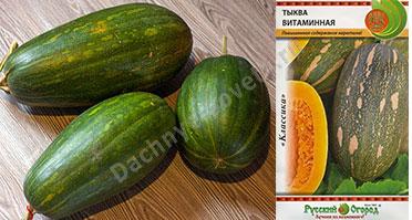 Тыква витаминная: описание и фото