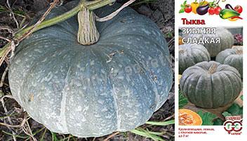 Тыква зимняя сладкая: описание и фото