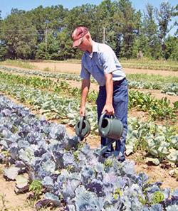Как правильно поливать овощи