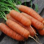 Агротехника выращивания моркови