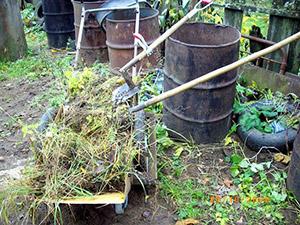 Выращивание тыкв в бочках 761