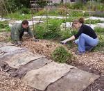 осенние работы в огороде