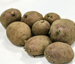 какой сорт картофеля выбрать