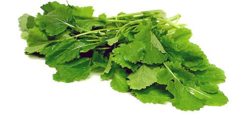 Выращивание ранней зелени: листовая горчица